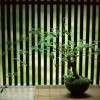 三井住友トラスト コア投資戦略ファンド(安定型) コアラップが1位 | バランス型投資信託ランキング  (2017年10月18日)